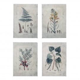 bloomingville poster illustration botanique style papier ancien