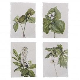 bloomingville illustration poster botanique fleurs style papier ancien