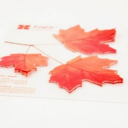 Appree Sticky Leaf Memo Large (Maple - Red)