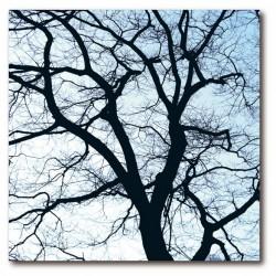 Tableau décoratif design remember fifty50 old trees 1