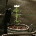 Pot de fleur en tissu géotextile bacsac marron outdoor 3 L